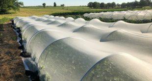 قیمت نایلون کشاورزی کیلویی در اردبیل