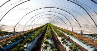 قیمت نایلون عریض کشاورزی