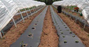 نایلون عریض کشاورزی